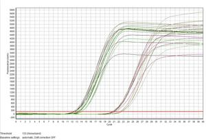 实时荧光定量PCR